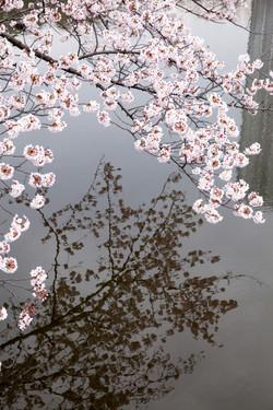 Japon_99
