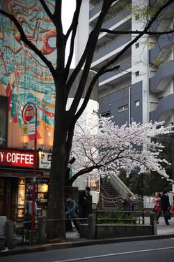 Japon_184