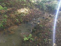 Rio com água limpa