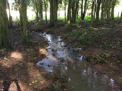 Pequeno rio com água limpa