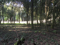 Linda àrea verde