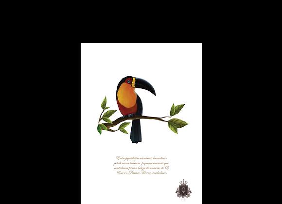 Quadro Pássaro Tucano