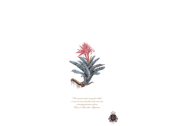 Quadro Bromélia Rosa