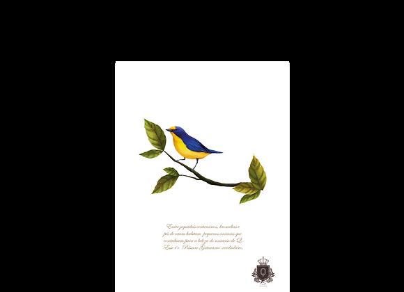 Quadro Pássaro Gaturamo