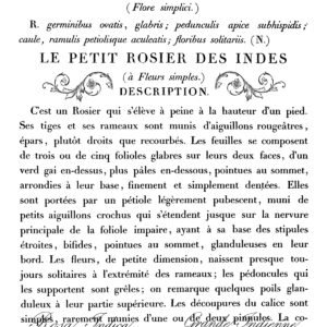 LE PETIT ROSIER 11X14 DECOR TRANSFER