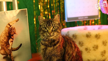 The Kitty Kat Killerdownloadframes.00_07