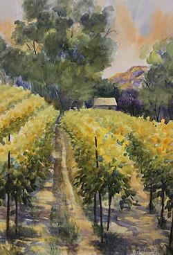 Eucalyptus and Vines