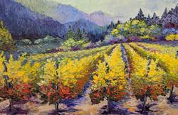 Vineyard Impressions