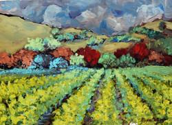 Vineyard perspective