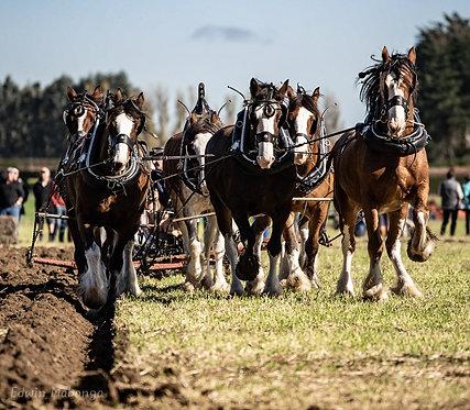 Humptys Horses