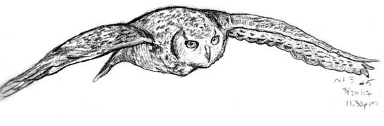 My Sketchbook: Owl