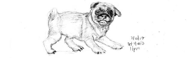 My Sketchbook: Dog