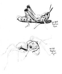My Sketchbook: Insects