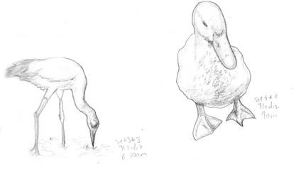 My Sketchbook: Birds