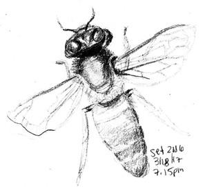 My Sketchbook: Bee