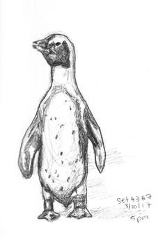 My Sketchbook:Penguin