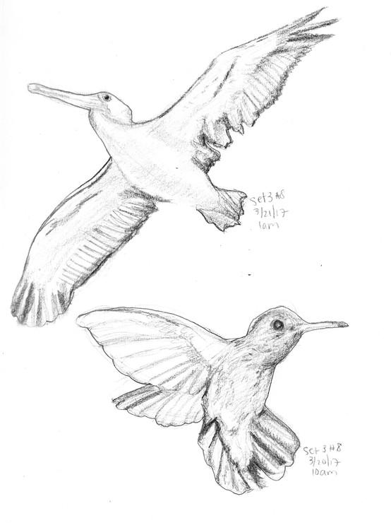 My Sketchbook Birds #2