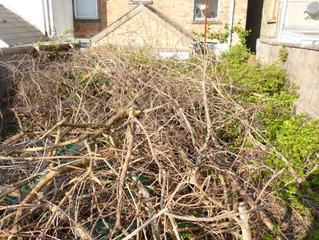 garden clearance bridgend before