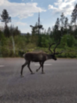 Rudolph visitwolfden.com