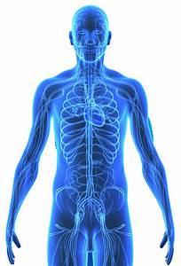 Vertebral Subluxations and Vascular Diseases