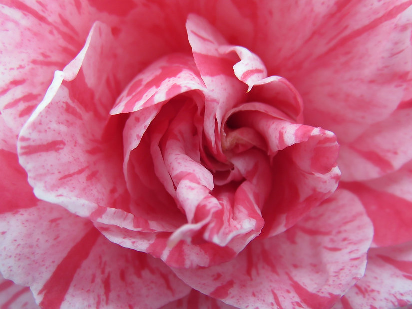 flower-702743_1920.jpg