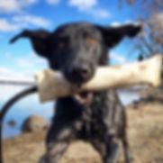 dog behaviorist Glen Ellyn