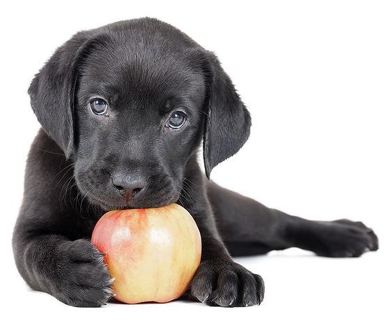 Best puppy training in Glen Ellyn