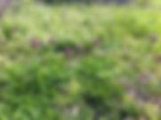Green Collar Landscaping does sod installation in Virginia Beach