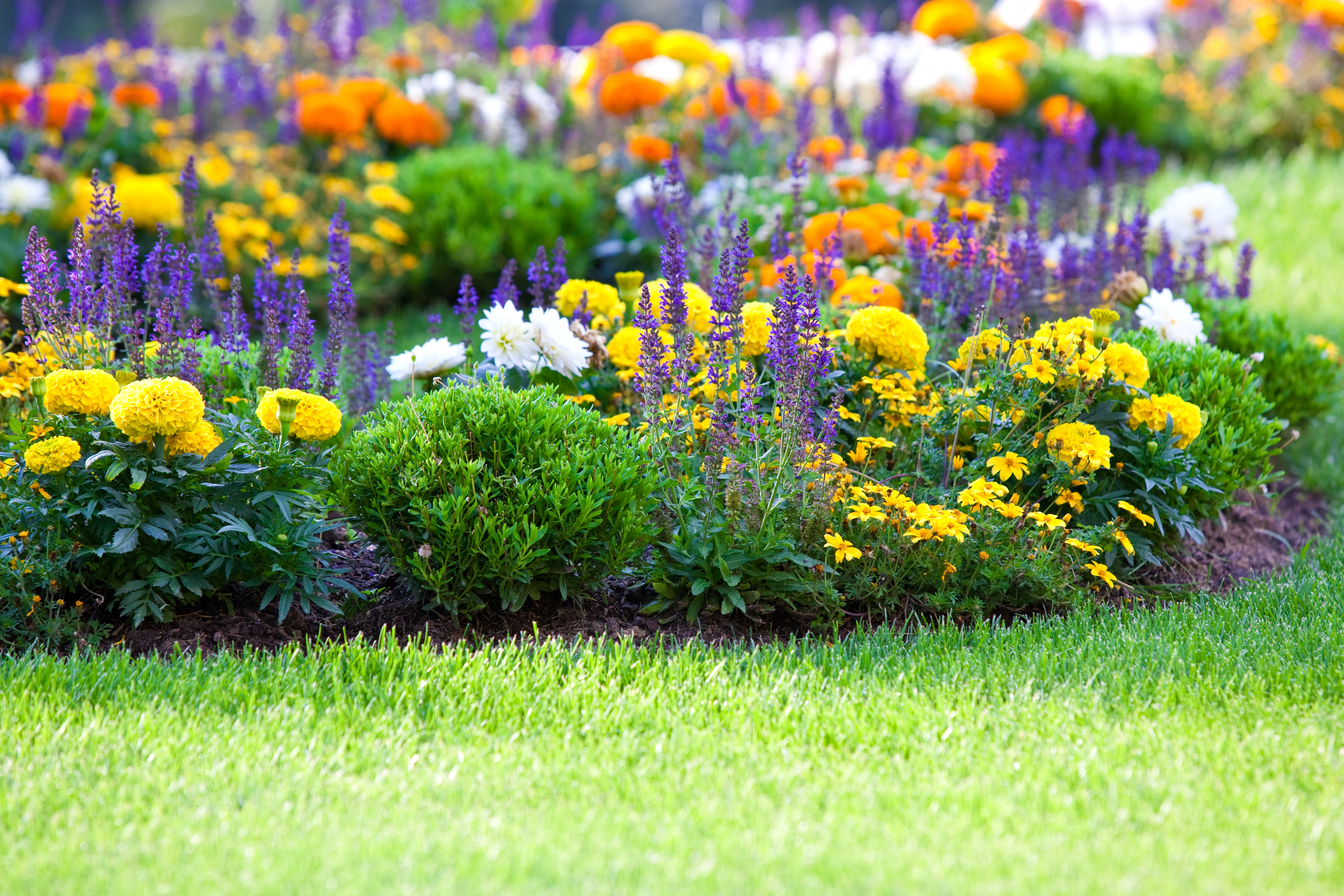 Need Advice for Planting Annuals?