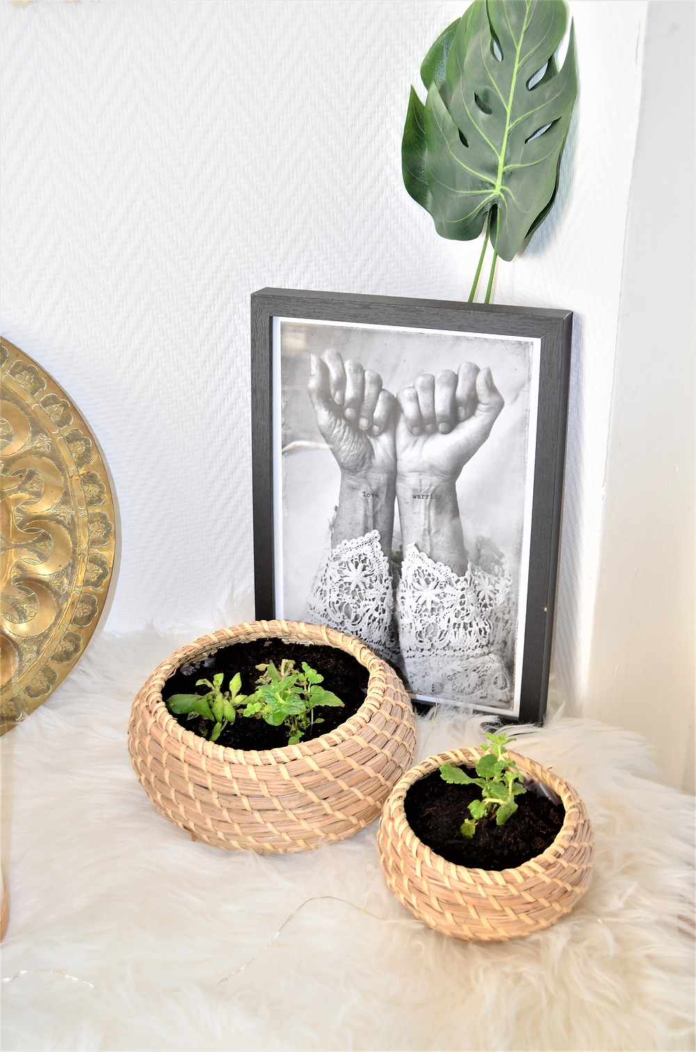 avis ma plant'box
