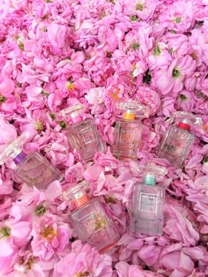 Collection parfums Nocibé