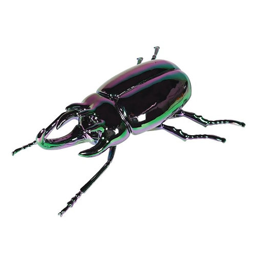 Multicoloured Luster Stag Beetle