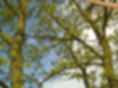 élagage, Vosges, gérardmer, xonrupt-longemer