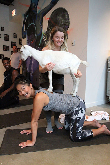 goat-yoga-3.jpg