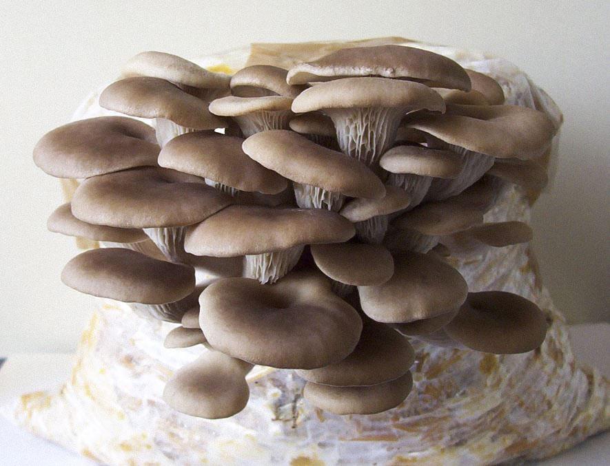 Selv groede svampe