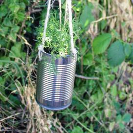 Hængende potteplante