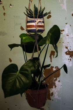 Plante ophæng