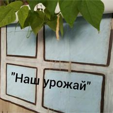 """Ни дня без сюрпризов! Фасолевый урожай в """"Центре Детства""""!"""