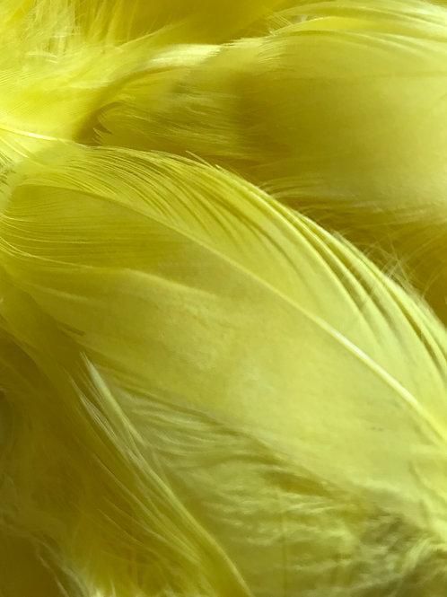 Banana Yellow Feathers