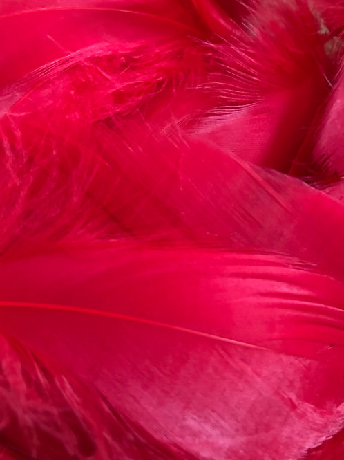 Poppy Red Feathers