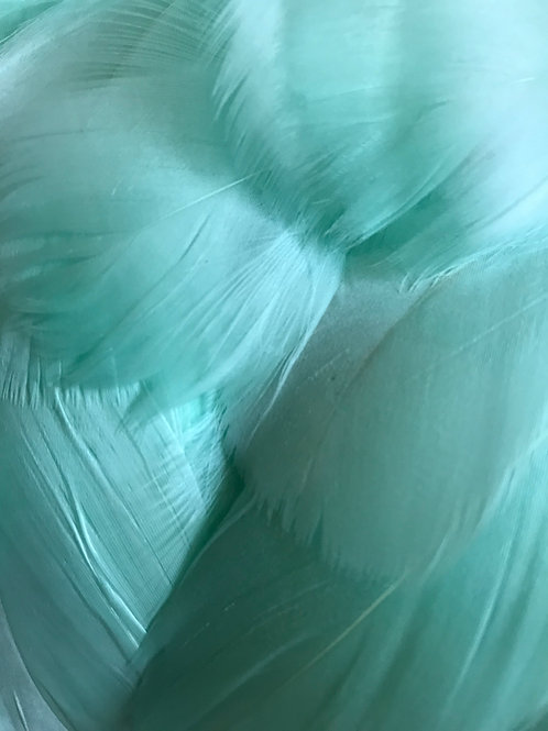 Mint Green Feathers
