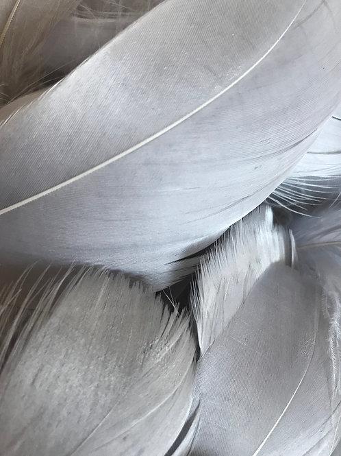 Slate Grey Feathers
