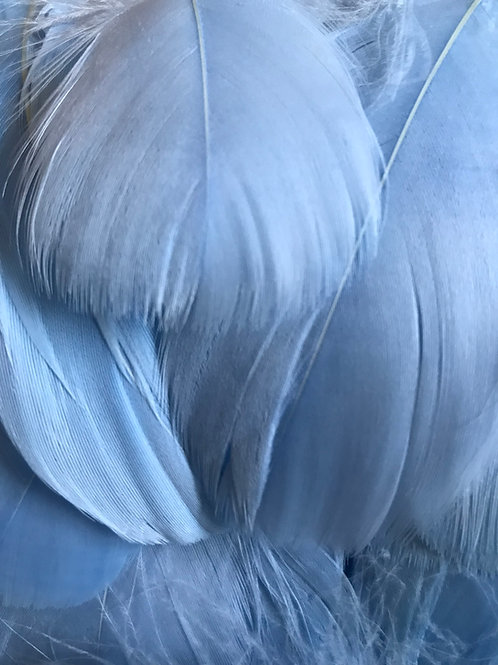 Baby Blue Feathers