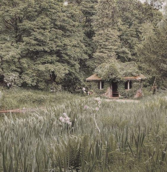 uma cabana na floresta, com plantas bem grandes na frente e coberta de hera
