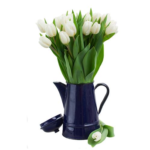 Tulips - 6 inch pots