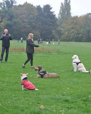 Educateur Canin Lille 59, Faustine Coach Canin