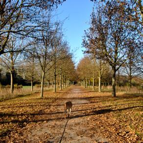 Parcs Canins et Promenades dans la région Lilloise