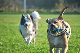 Education canine Lille 59, Faustine Coach Canin