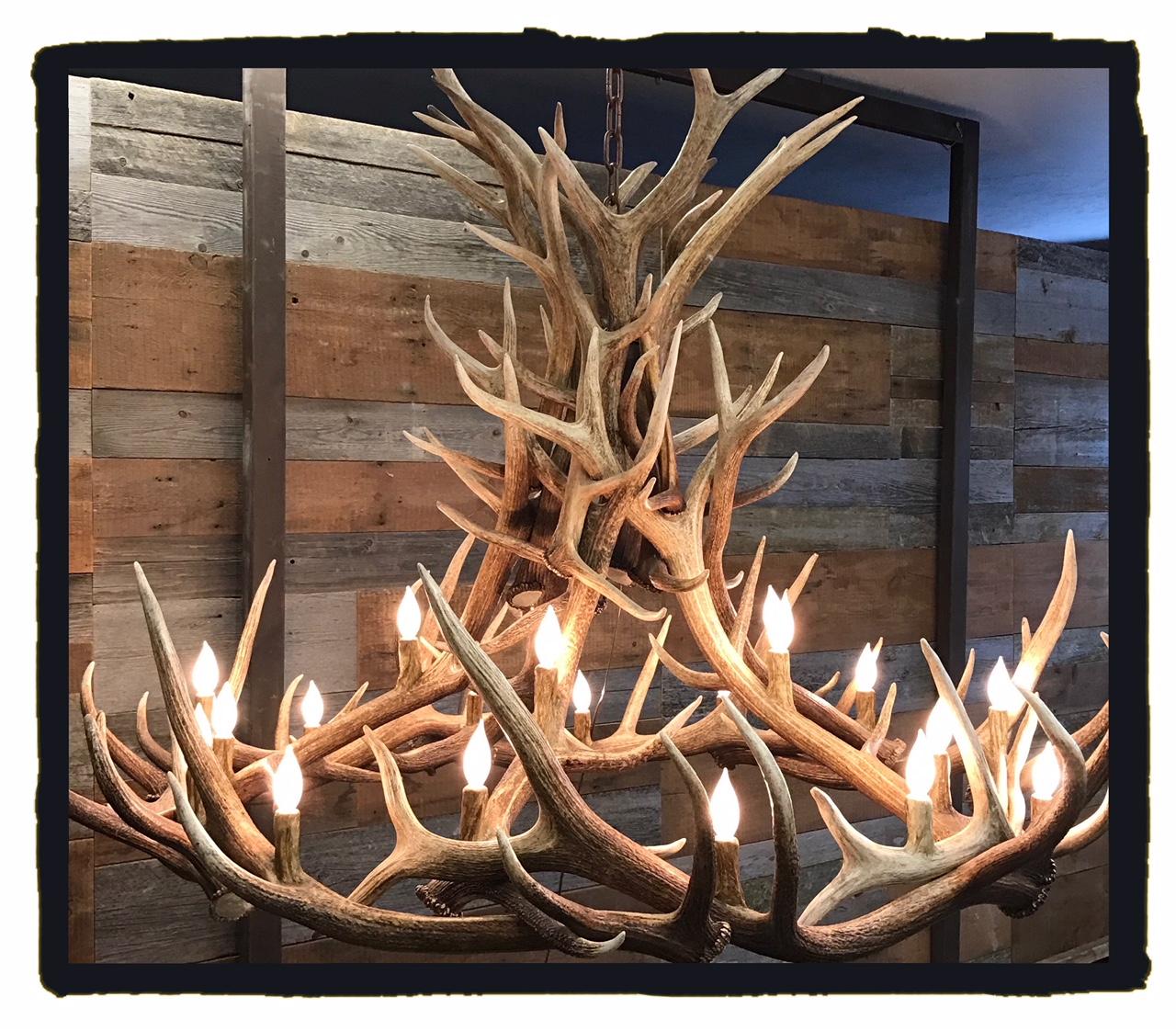 Aspen High Elk
