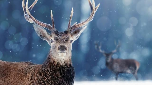 Snow Animals